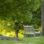 Bench in front of green trees on a green lawn